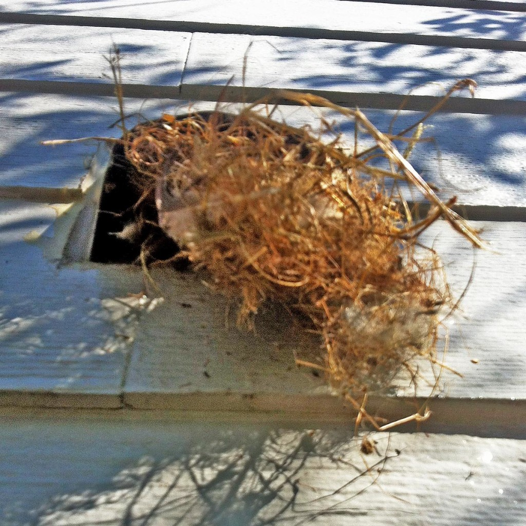 Bird nest in vent